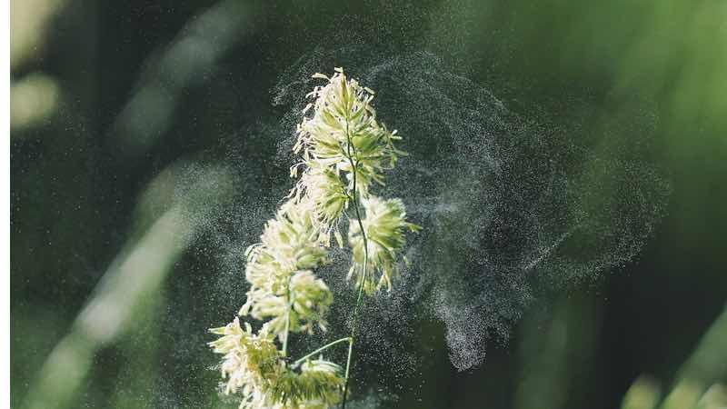 Polinización vegetal, purificadores de aire opiniones
