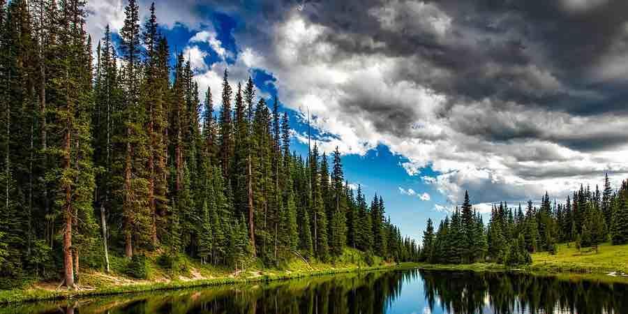 el bosque es un gran generador de iones negativos